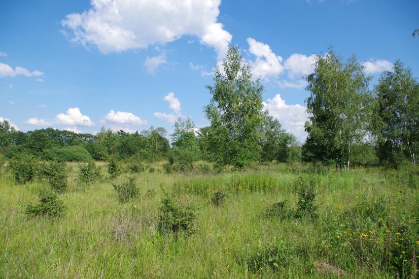 Murawy na Opatowicach