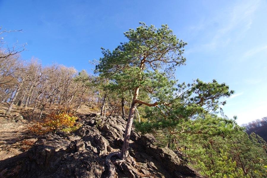 Góra Choina
