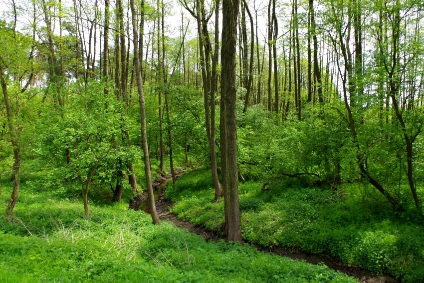 Lasy łęgowe