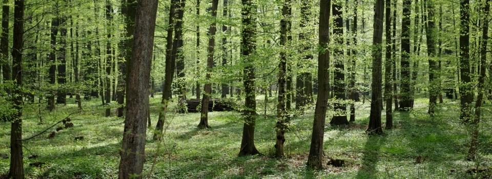 Lasy Oławskie