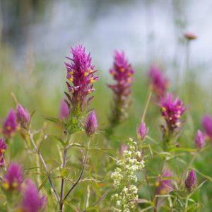 Kwieciste łąki i piękne buczyny, czyli Góry Kaczawskie wczesnym latem