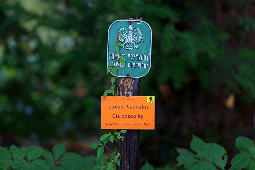Pomniki Przyrody (Ogród Botaniczny)