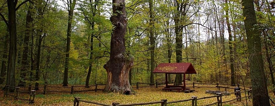 Pomniki Przyrody na północy Wrocławia