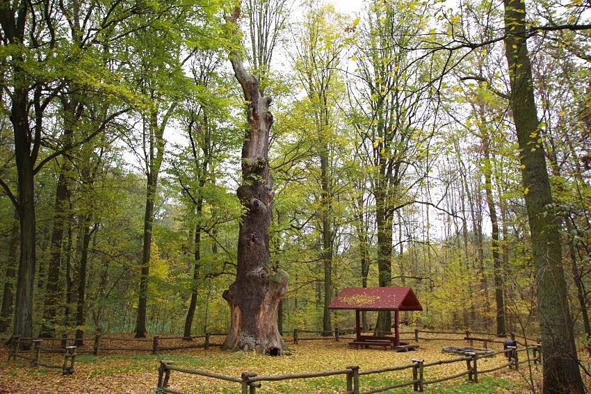 Las Rędziński