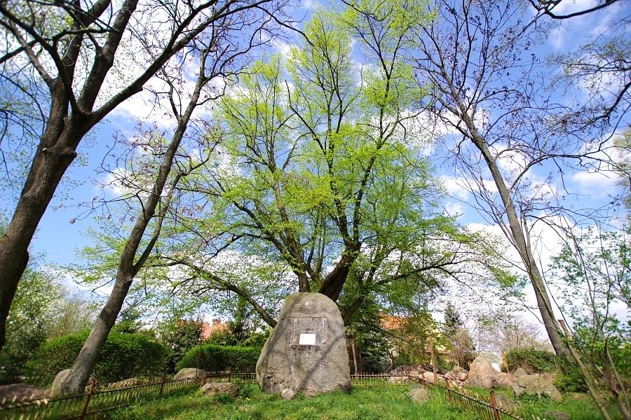 Pomniki Przyrody w gminie Siechnice