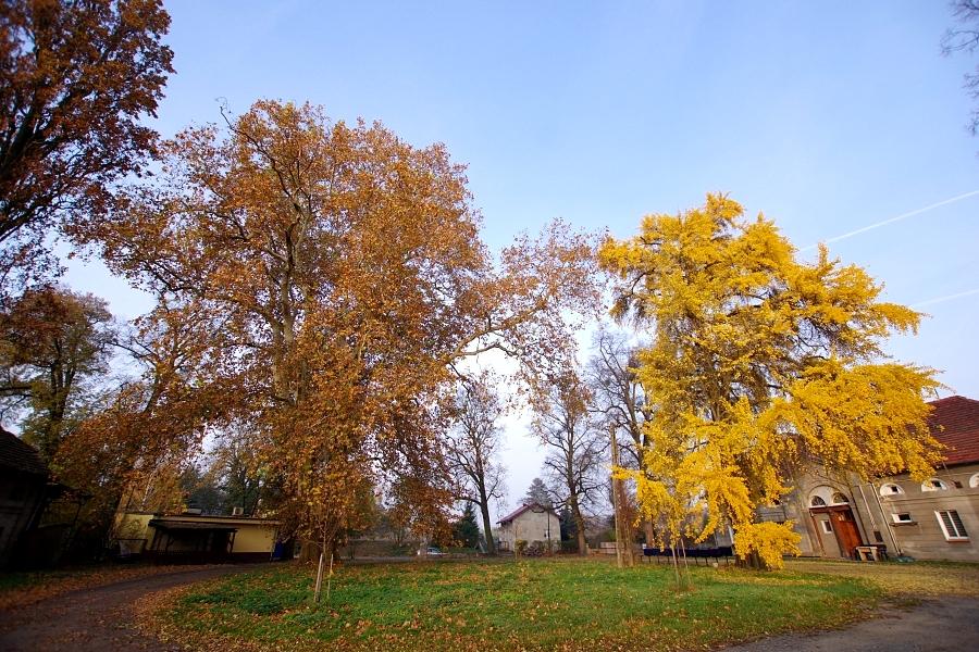Pomniki Przyrody we wsi Skarszyn i Boleścin