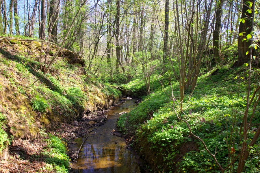 Dębowa Dolina Kojszówki