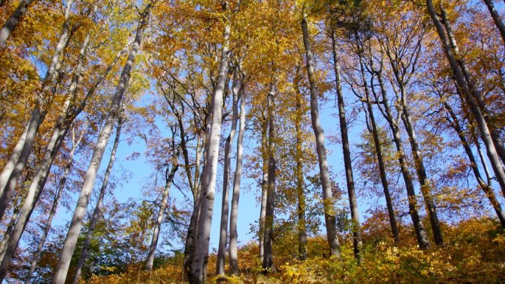Bukowiec w Górach Suchych