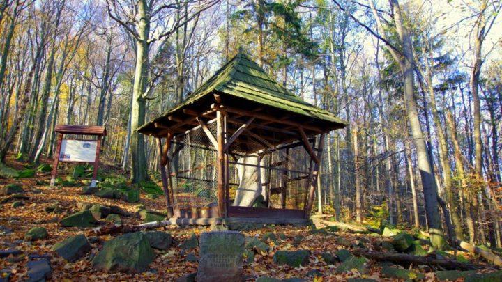 Ścieżka Przyrodnicza Wieżyca & Źródło Anny