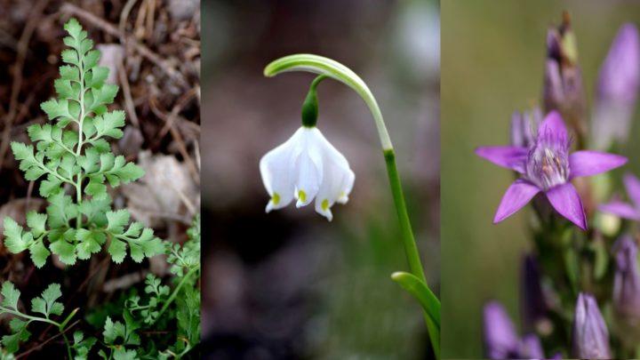 Kwiatowy Symbol Dolnego Śląska