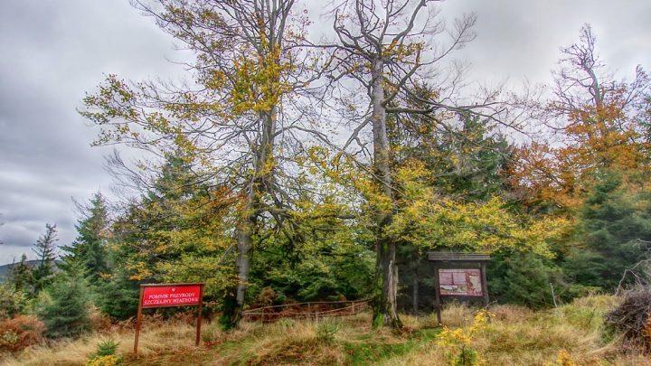 Lesista Wielka i okolice